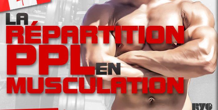 La répartition PPL en musculation