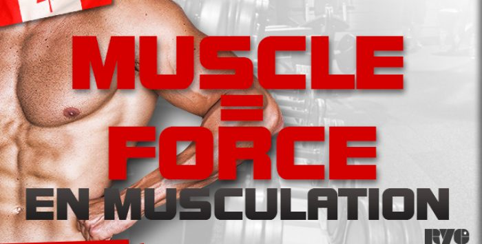 Muscle =Force en musculation ?